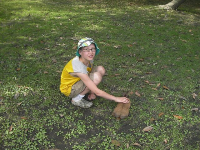 Even the wild bunnies are tame in Japan.