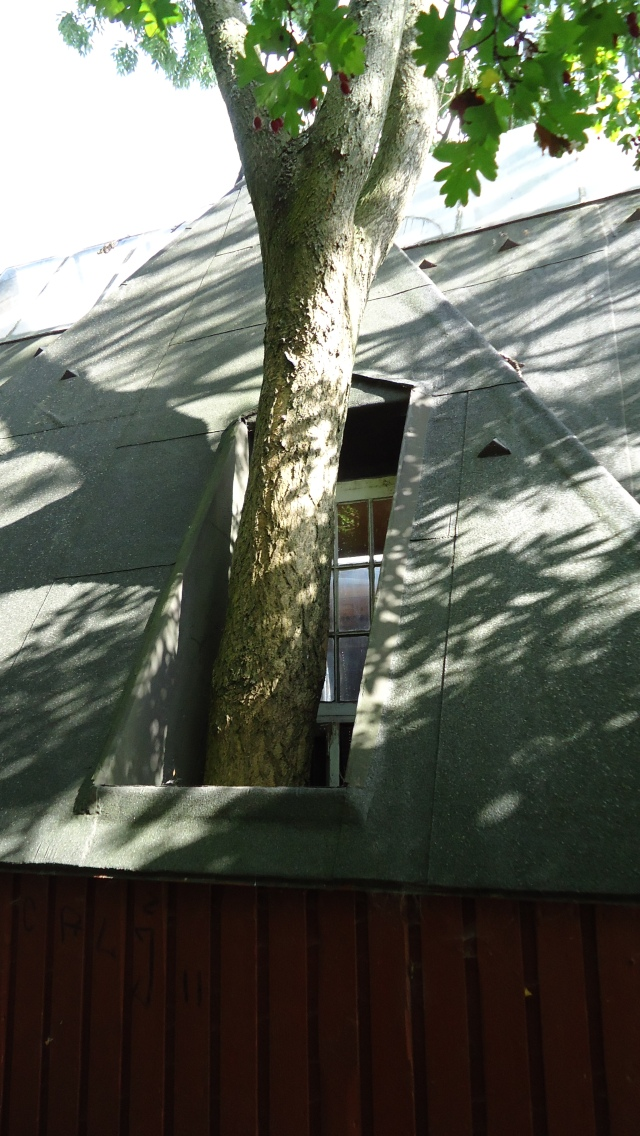 A house in Christiania, Copenhagen is built around a tree.
